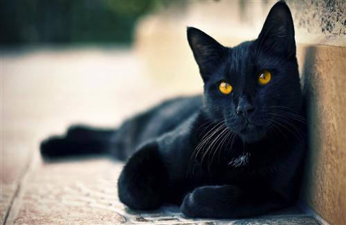 Black Cat with Yellow Eye HD Wallpaper