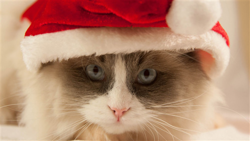 Cat Wear Christmas Cap