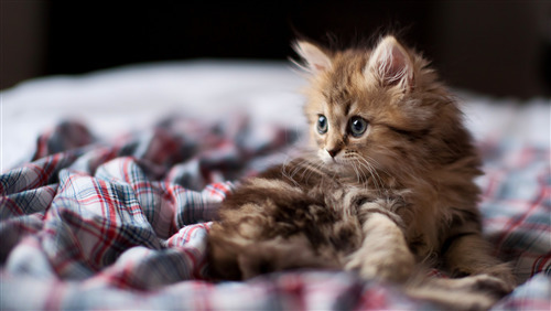 Charming Cat Baby Image Download
