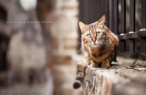 street cat of india photo hd wallpapers