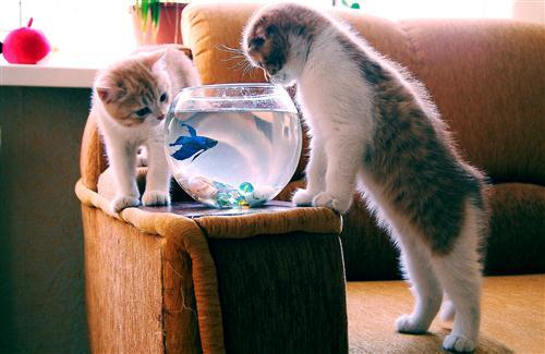 Two Cats Watching Fish