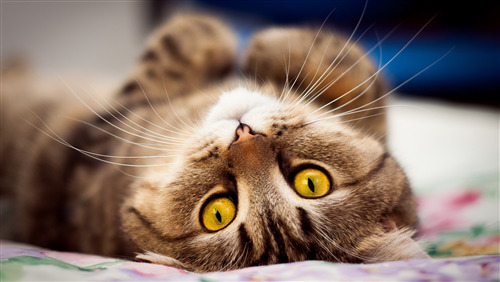 Yellow Eye of Cat HD Wallpaper