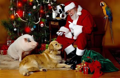 Santa Claus in Christmas Dog Parrot and Cat Wallpaper