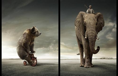 Elephant and Bear Creative Wallpaper