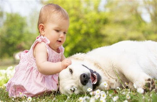 Cute Baby Playing with Dog in Garden HD Wallpaper