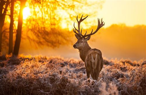 Big Deer in Jungle During Winter Season HD Photo