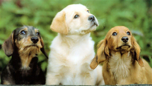 3 Beautiful Dog Puppy Photo