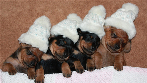 4 Dog Puppy Wear White Cap