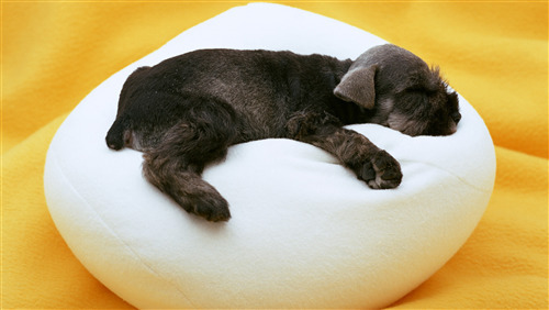 Black Dog Puppy Sleeping