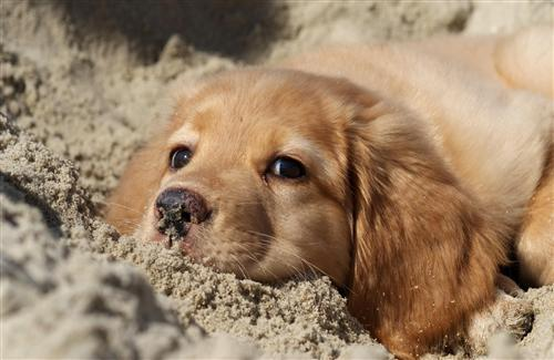 Cute Puppy on Sand