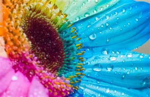 Beautiful Colorful Flower Wallpapers Download