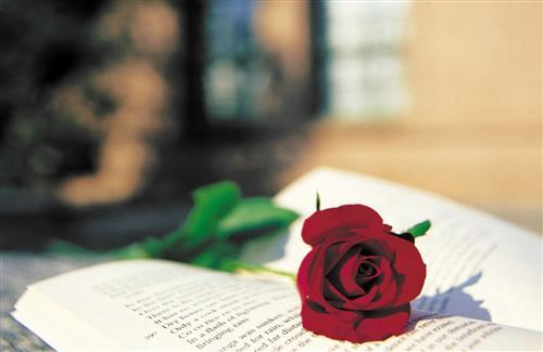 Beautiful Red Rose on Book
