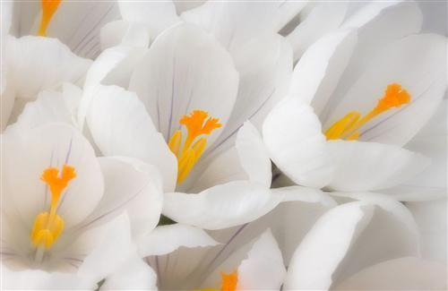Best White Flower Wallpapers Download