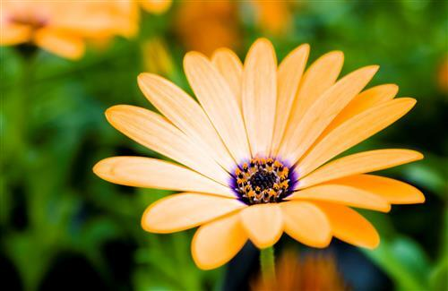 Nice Yellow Flower HD Photo Background