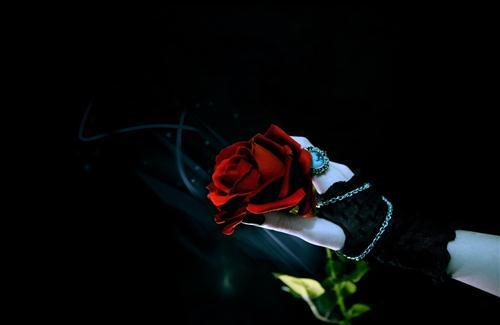 Red Rose in Girl Hand Photo