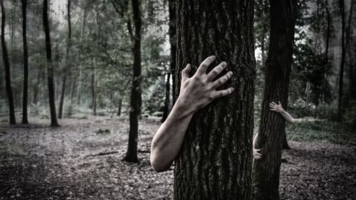 Horror Hand on Tree 4K Photo