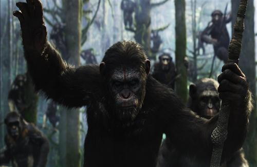 Dawn of the Planet of the Apes Hollywood Movie Gorilla Photo