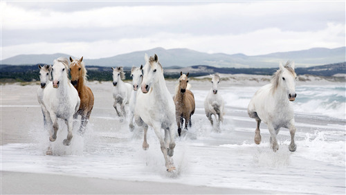 4K Photo of Group of Horse Running on Beach