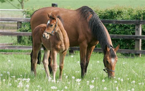 Brown Horse with Her Lovely Child
