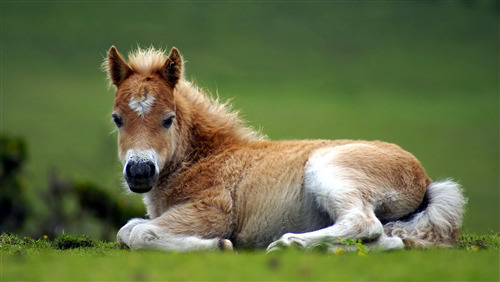 Download Pic of Horse Pony