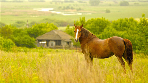 Superb Wallpaper of Brown Horse
