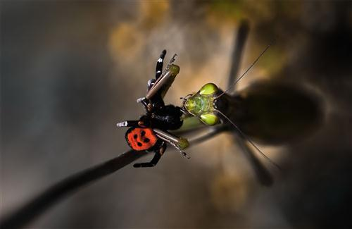 Insect Macro Photography HD Photo