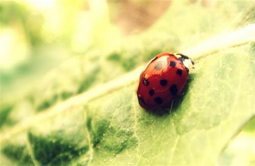 Lady Bug on Leaf HD Wallpaper