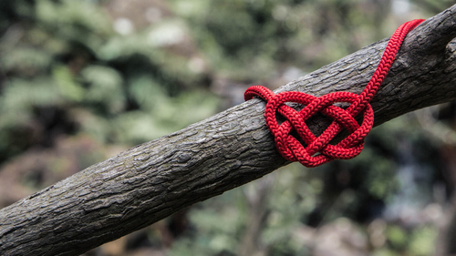 Creative Heart with Rope in Branch