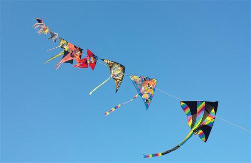 Kites Row in Sky During Makar Sankranti Festival HD Pics