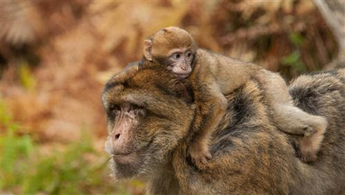 Baby Monkey with Her Mother