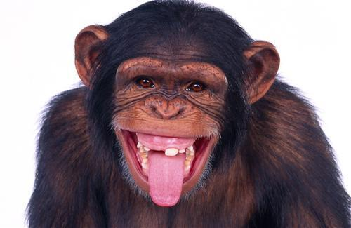 Monkey Wallpapers Previous Wallpaper Cute Funny Baby