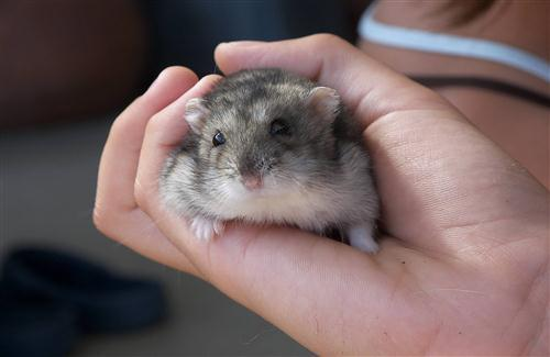 Animal Mouse in Hand