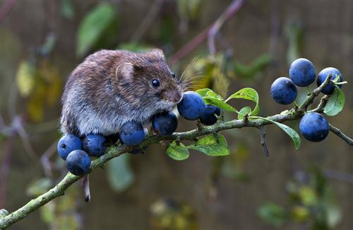 Mouse on Tree Photo