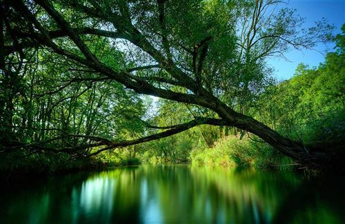 Amazing Nature Green Tree on Water