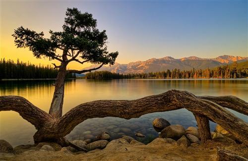 Beautiful Nature Lake and Tree Wallpaper