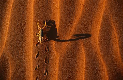 Nice Scorpio in Desert Wallpapers