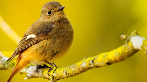 Yellow Small Bird on Branch 4K Wallpapers
