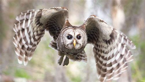 Awesome Bird Owl