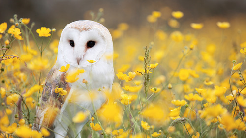 Chubby Owl Baby in Flower Garden 5K Wallpaper