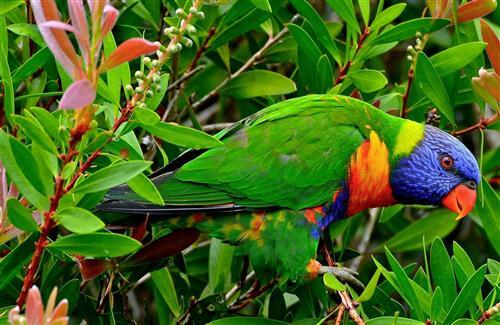 Beautiful Multicolor Parrot Seating in Garden Wallpaper