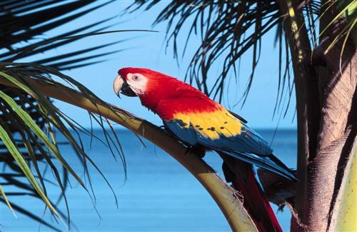 Colorful Parrot Sitting on Tree