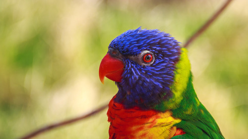 Nature Parrot Child with Red Beak Wallpaper