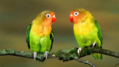 Two Parrot Sitting on Branch