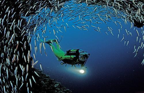 Beautiful Small Fish In Sea World Hd Wallpapers Hd