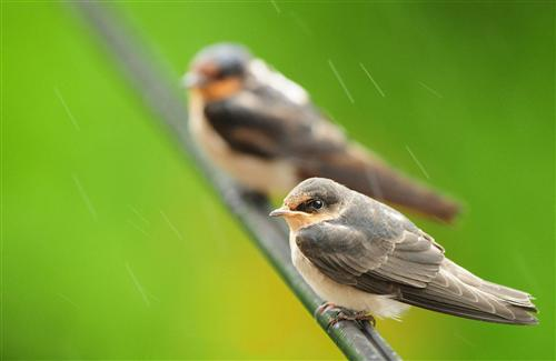 Lovely City Sparrow Image