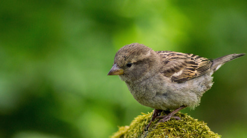 Small Sparrow 4K Photo Background
