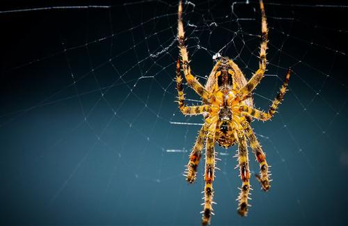 Animal Yellow Spider HD Pics