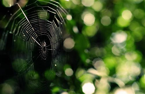 Beautidul Big Spider Web