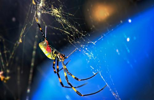 Colorful Spider HD Wallpaper