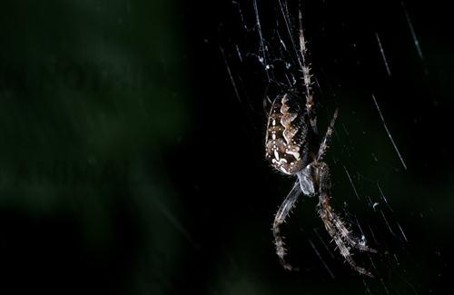 Night Photography of Spider